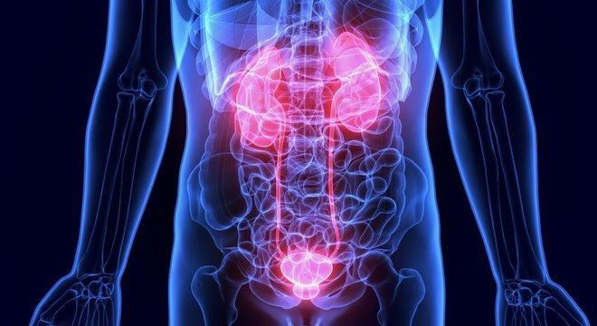 Os rins são dois órgãos em forma de feijão que filtram as toxinas do sangue e transformam os resíduos em urina