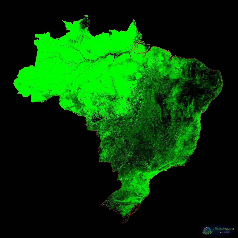 O Brasil também aparece em galeria sobre coberturas florestais, inspirada em viagem que ele fez à Indonésia