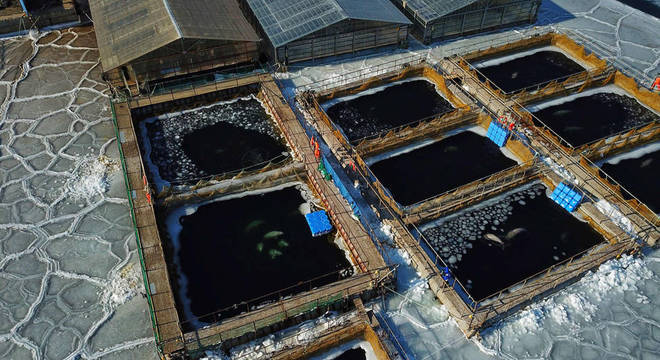 Imagens aéreas mostram pedaços de gelo nos tanques, o que provavelmente está dificultando que baleias consigam se manter aquecidas