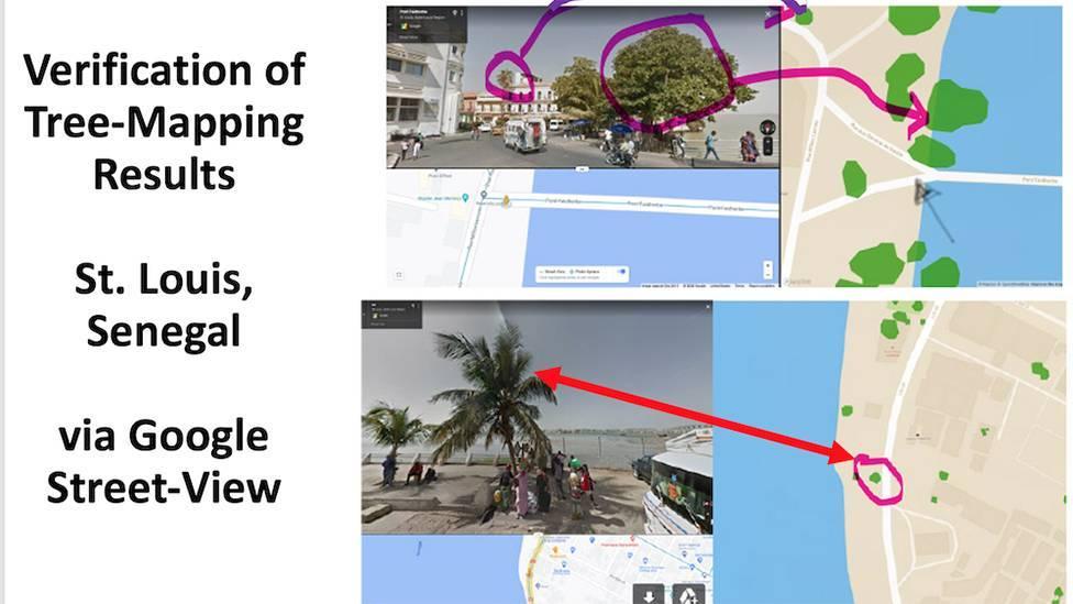 Os pesquisadores também usaram o Google Maps para verificar a presença de árvores em áreas povoadas da área estudada