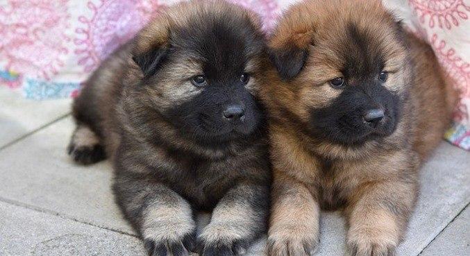Todas as raças de cães, inclusive os de apoio emocional, têm importação proibida
