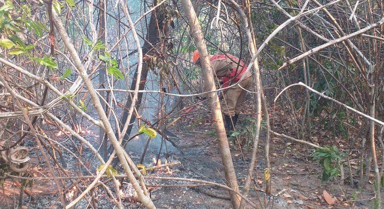 Mais de 23 mil hectares de vegetação foram queimados