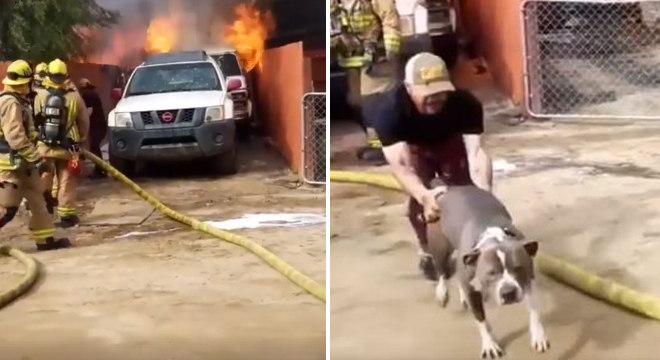 Homem se arrisca em incêndio para salvar animal de estimação