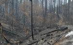 incêndio patagônia