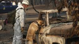 Califórnia chega a 1.000 desaparecidos e 71 mortos após incêndios ()