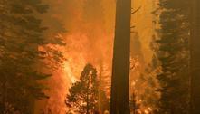 Incêndio florestal na Califórnia coloca árvores milenares em risco