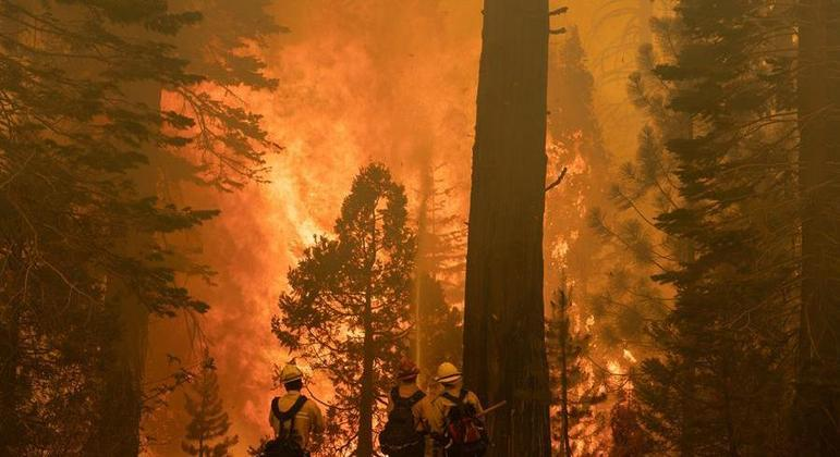 Parque da Califórnia conta com 5 das 10 árvores mais volumosas do mundo
