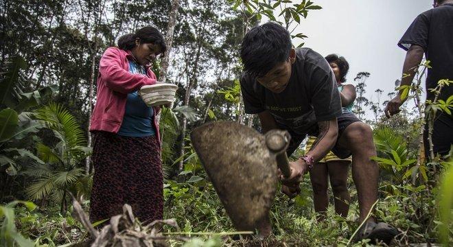 Mulheres são 40% dos agricultores guarani na TI Tenondé Porã
