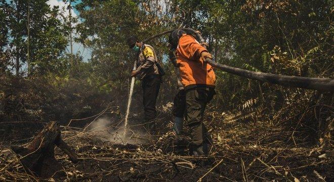 Indonésia conseguiu reduzir em 40% o desmatamento em 2018