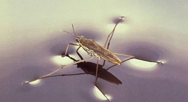 A tensão superficial é o que permite que alguns insetos possam caminhar sobre a água
