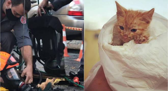 A gata recebeu o nome de Rebeca e recebeu atendimento dos veterinários do instituto
