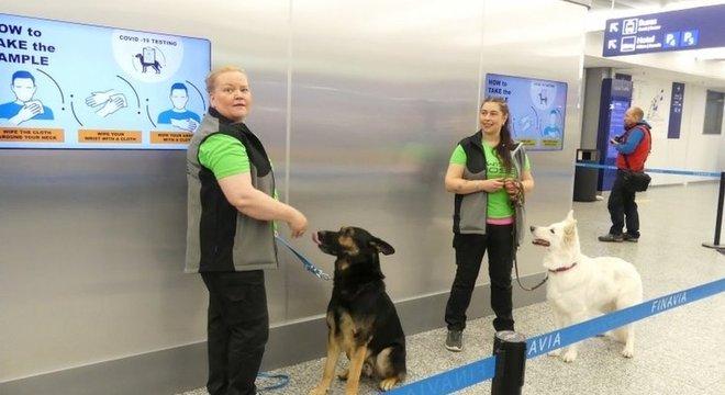 Cães farejados têm ajudado no combate à pandemia