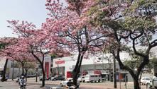 Primavera deve trazer alívio no calor e na umidade do ar em MG