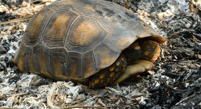 Além do risco de serem alvos das chamas, animais também convivem com a perda de habitat