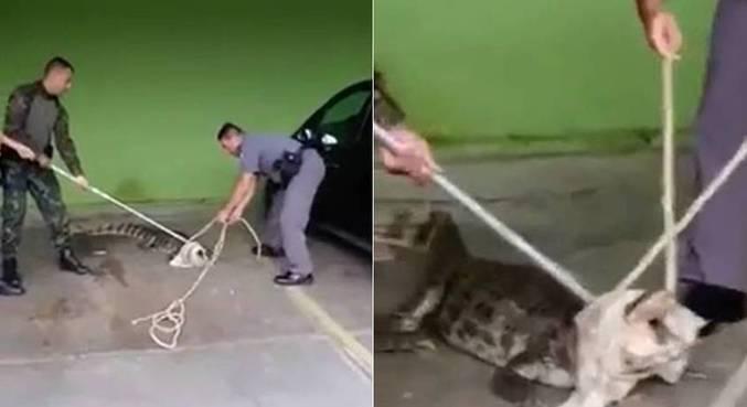 Animal foi resgatado posteriormente pelos policiais