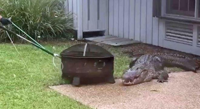 'Big George' apareceu no Estado da Carolina do Sul, Estados Unidos