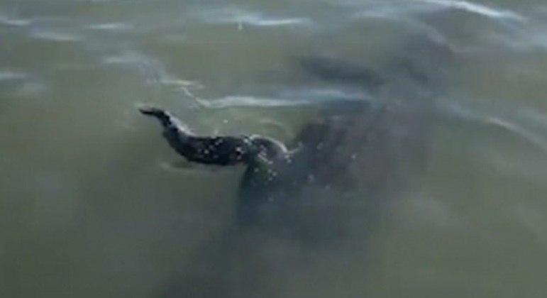 Réptil deu uma rodopiada enquanto tentava se livrar da linha de pesca