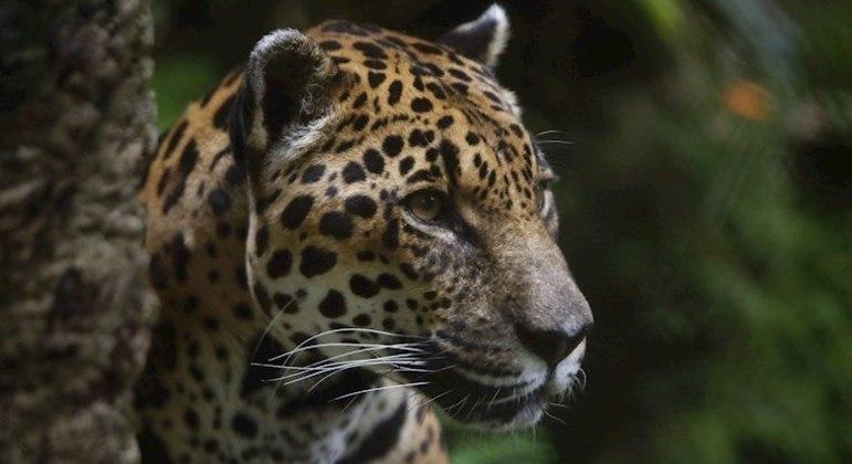 Aquecimento global afeta a vida de várias espécies no planeta