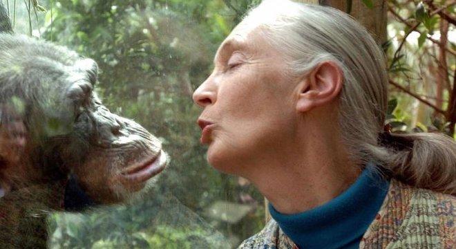 Jane Goodall aprendeu a se comunicar com chimpanzés usando sons e gestos
