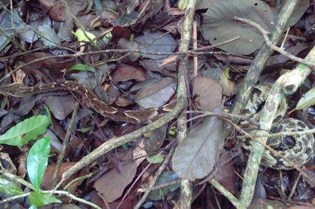 Ataques de predadores foram mais que o dobro no Parque do Estado que na Cantareira