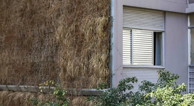 Plantas estão falecendo devido à falta de manutenção