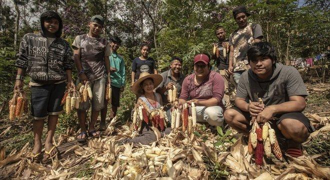 Jera Guarani, liderança da aldeia Kalipety, de chapéu (ao centro) durante colheita de milho