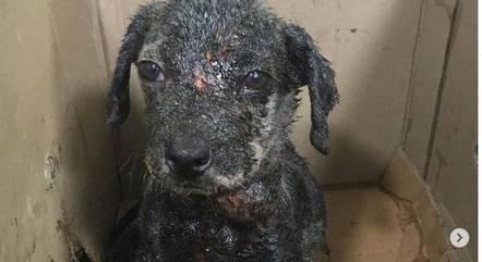 Cachorros foram resgatados de casa