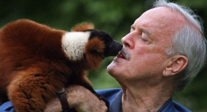 John Cleese é um grande fã de lêmures - embora essa espécie em particular não tenha o nome dele