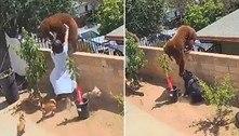 Jovem derruba ursa de muro para defender cachorros de estimação