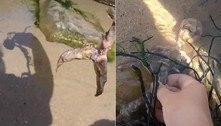 Jovem acredita ter encontrado esqueleto de sereia em praia