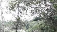 Jovem de 14 anos morre por raiva humana em Angra dos Reis (RJ)