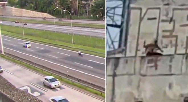 Grupo fica no alto da rodovia e lança pedras sobre os veículos para assaltos