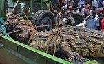 Segundo informes da população, o réptil — um crocodilo-do-nilo de cinco metros e 1 tonelada — tem 75 anos e matou 83 moradores entre 1991 e 2005.VEJA AQUI O CONTEÚDO COMPLETO!