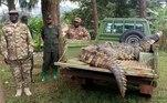 Um crocodilo chamado Osama foi identificadocomo o assassino sanguináriode 10% da população deLuganga, uma pequena vila nos arredores do lago Victoria, em Uganda