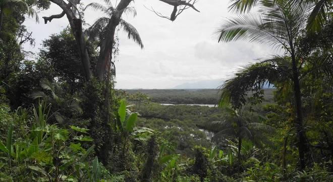 Na imagem, Jureia, uma das poucas áreas preservadas de Mata Atlântica em SP