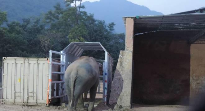Kaavan entra em sua caixa antes da longa jornada até o Camboja