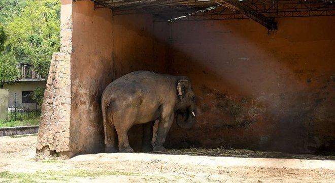 Kaavan parado sob a cobertura de um galpão onde vivia