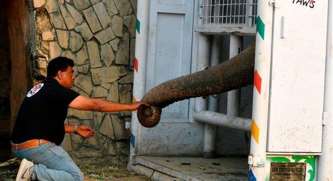 Khalil alimenta Kaavan em uma caixa de transporte construída para levá-lo ao Camboja
