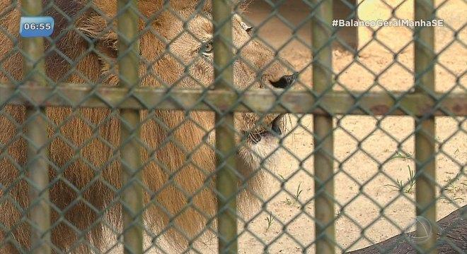 Kitty Lima apresenta projeto de fechamento do zoológico