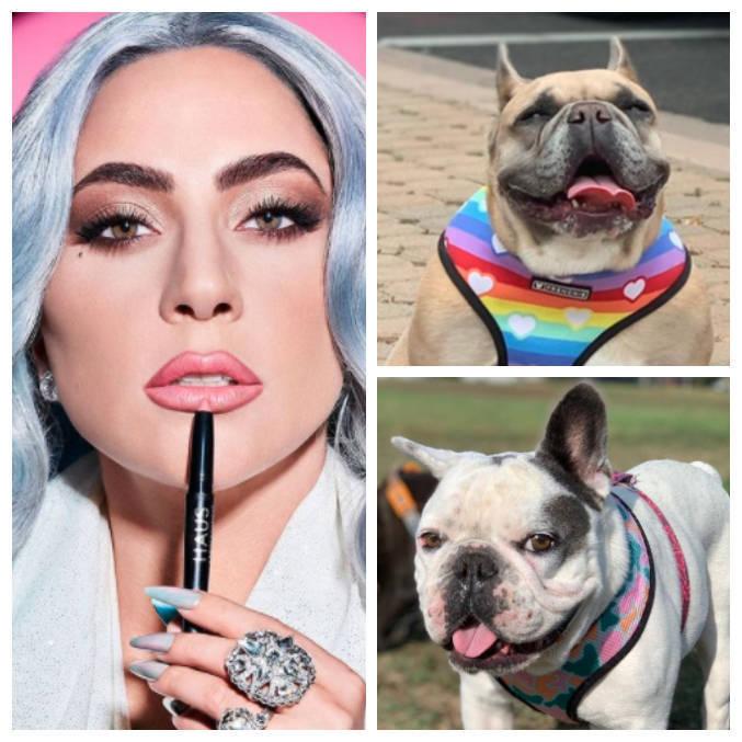 Lady Gaga e dois de seus três cachorros