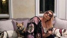 Final feliz: cães de Lady Gaga são resgatados! Saiba como!