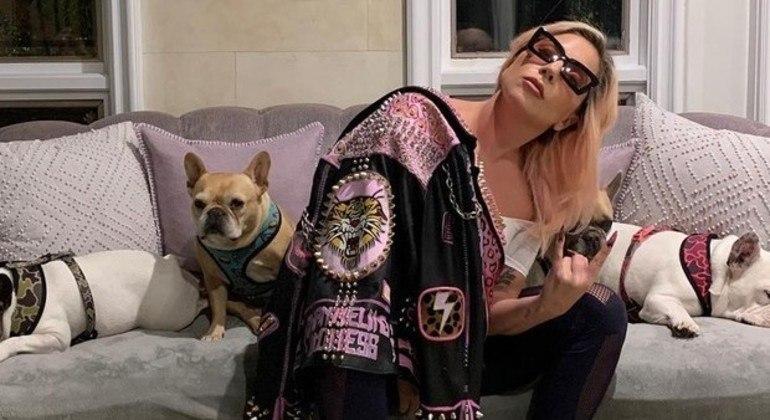 Animais foram devolvidos ilesos após Gaga oferecer uma recompensa
