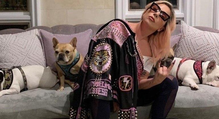 Lady Gaga e os cães da cantora