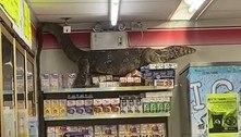 Lagarto gigantesco escala prateleira de loja e deixa geral apavorado