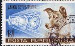Laika era uma mistura das raças husky-spitz encontrada andando nas ruas de Moscou, após engenheiros do programa espacial do país receberem ordens do líderNikita Khrushchev para planejar um voo para7 de novembro de 1957, o 40º aniversário da Revolução