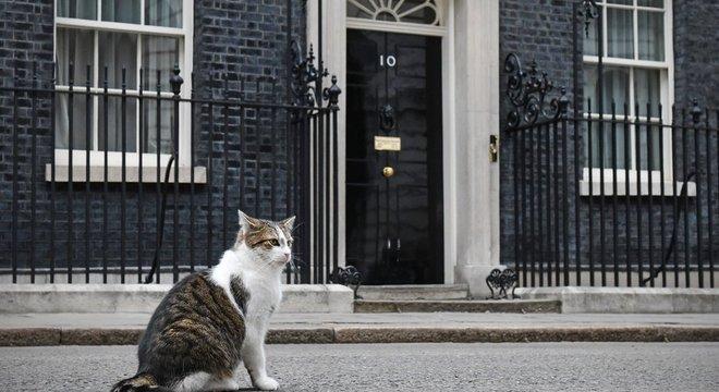 Larry, o gato mais famoso do Reino Unido - ele é o mascote de Downing Street, residência oficial do Reino Unido