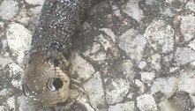 Lagarta de mariposa em jardim é confundida com 'cobra velha e seca'