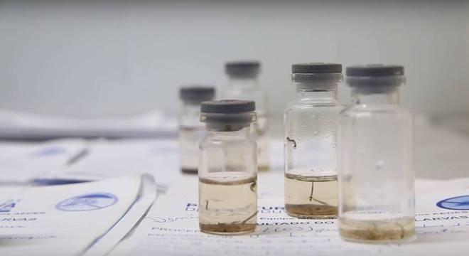 A maioria das cidades com dengue zero fica no sudoeste paulista