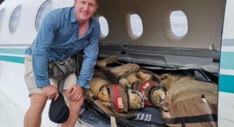 Leões foram transportados para uma nova reserva na África
