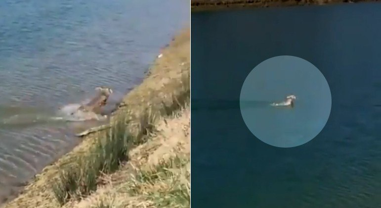 Lembre encantou internautas ao ser flagrado durante nado em corpo d'água